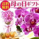 【送料無料】母の日 ギフト 選べる花(胡蝶蘭)とスイーツセットFset 【ティーカップ胡蝶蘭+パウンド】