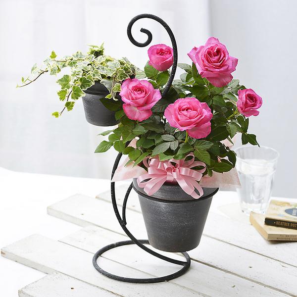 2020年 母の日 バラの鉢植えギフト「デュエットローズ」