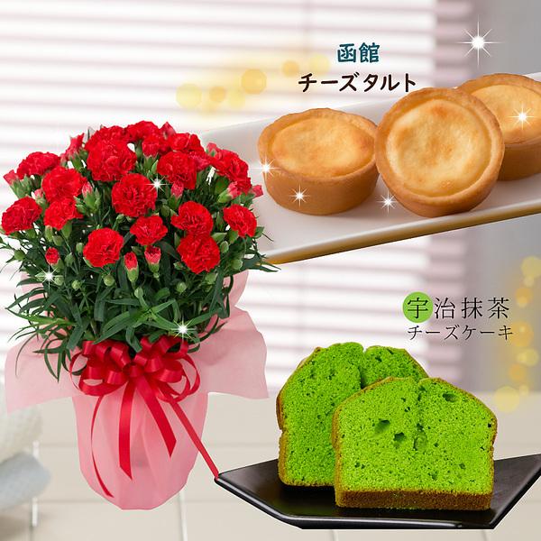 2020年 母の日ギフト 変り咲きカーネーション4号鉢植えオルフィカと絶品スイーツ-抹茶ケーキ