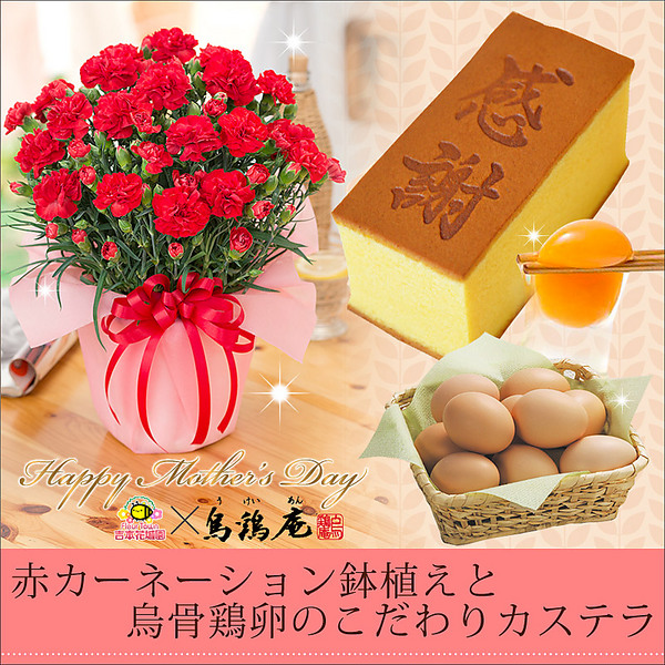 【母の日ギフト】烏骨鶏の卵を使用したこだわりカステラと赤いカーネーションの鉢植えセット
