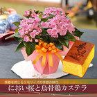 敬老の日 2021 プレゼント花とカステラ 選べる季節の鉢花 におい桜 鉢植えギフト 9月16日から20日にお届け