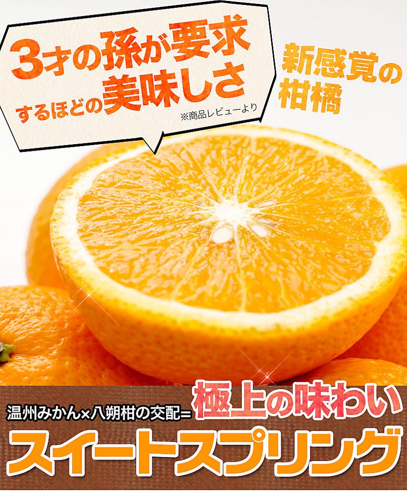 【熊本県産】新種の 柑橘!スイートスプリング 1.5kg (3L~Lサイズ/3L-L混合) ※複数購入の場合1箱におまとめ配送《3-7営業日以内に出荷予定(土日祝日除く)》【送料無料】【W】