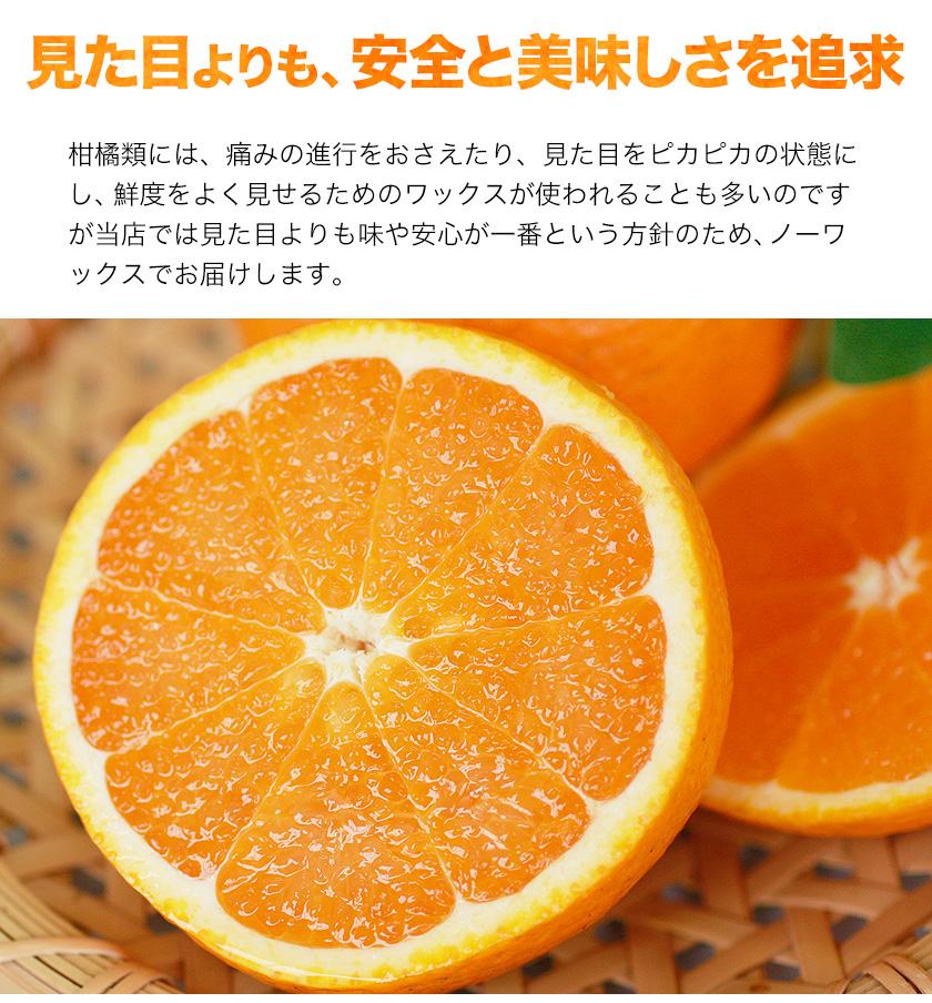 訳あり 清見 1.5kg / 約6~約20玉前後入 送料無料 熊本産 柑橘 旬 の みかん 2セット購入で1セット分、3セット購入なら3セット分増量 《3-7営業日以内に出荷予定(土日祝日除く)》【W】
