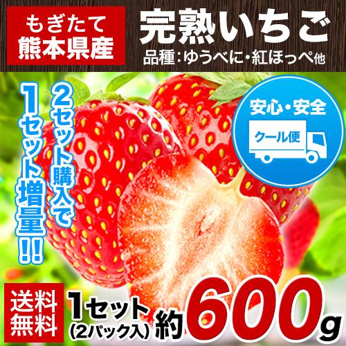 完熟 いちご 約600g (1セット 2パック入) 送料無料 もぎたて 熊本県産 ギフト スイーツ 2セット購入で1セット増量《3月末-4月中旬頃より順次出荷予定》【W】