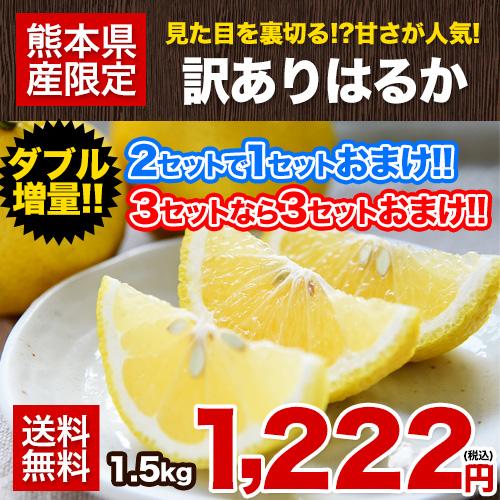 訳あり はるか 1.5kg 熊本県産 送料無料 旬 の 柑橘 みかん 取り寄せ 通販 ※複数購入の場合1箱におまとめ配送 2セット購入で1セット分、3セット購入なら3セット分増量 《3-7営業日以内に出荷予定(土日祝日除く)》【W】