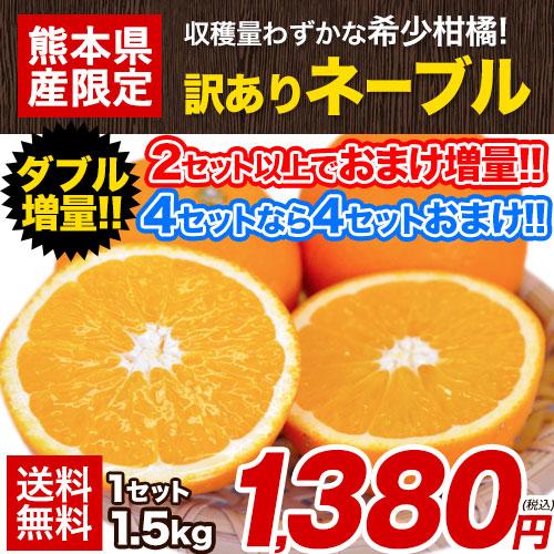 【2セット購入なら100円OFF!!】ネーブル オレンジ 1.5kg 送料無料 訳あり 熊本県産 旬 みかん 2セットで1セット分増量 7-14営業日以内順次出荷(土日祝日除く)【W】|