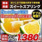 【送料無料】【熊本県産】新種の柑橘!スイートスプリング 1.5kg (3L~Lサイズ/3L-L混合) ※複数購入の場合1箱におまとめ配送《2月中旬~3月上旬頃より順次出荷》【W】