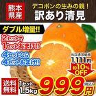 訳あり 清見 1.5kg / 約6~約20玉前後入 送料無料 熊本産 柑橘 旬 の みかん 2セット購入で1セット分、3セット購入なら3セット分増量 《3月下旬-4月中旬頃より順次出荷》【W】|