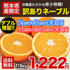 ネーブル オレンジ 1.5kg 送料無料 訳あり 安心安全 熊本県産 旬 の みかん 2セット購入で1セット 3セット購入なら3セット増量 ※複数購入の場合1箱におまとめ配送 《2月上旬-2月末頃より順次出荷》【W】
