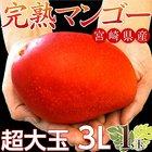 【5/14~19出荷】\特大サイズがあまっちゃう!?/宮崎県産『特大3Lマンゴー』1玉(450~509g)203a06260