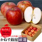 鈴屋の赤りんご※204b13020