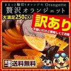 チョコレート 輪切りオレンジの 訳あり 贅沢 オランジェット 250g スイートチョコ&ミルクチョコ詰め込み