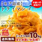 セブ島 ドライ マンゴー 10kg(1kg×10) ドライマンゴー 端っこ [訳あり] ドライフルーツ …