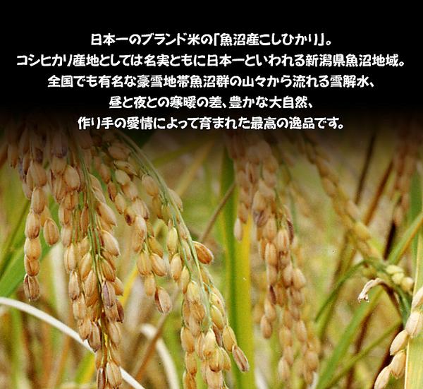 新潟県「魚沼産」こしひかり 6合(900g)
