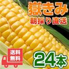 送料無料 嶽きみ 24本セット 青森県が誇るプレミアムとうもろこし まるで果物のような甘さ/トウモロコシ/コーン