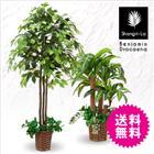 人工観葉植物 光触媒 ベンジャミン 幸福の木 ドラセナ フェイクグリーン インテリアグリーン 2本セット