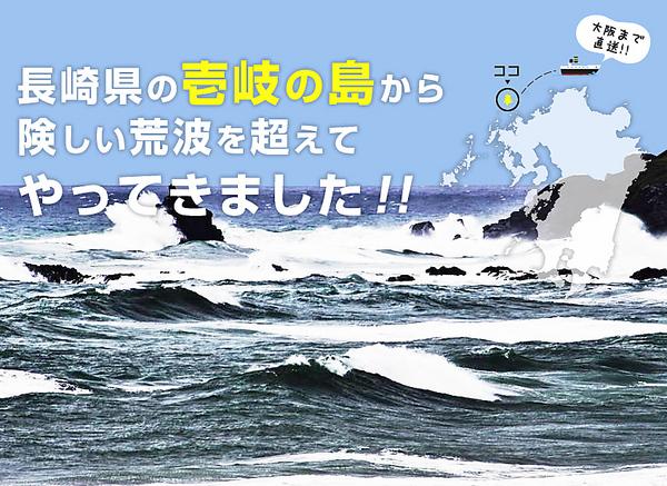 【日本全国送料無料】希少国産天然カットわかめ70g オープンセール ご飯のお供 海産物 オープン記念 長崎県玄界灘