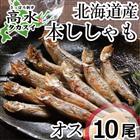 本ししゃもオス10尾 北海道日高産の本物のシシャモです♪【シシャモ】【ししゃも】ギフト/内祝い/引っ越し祝い/お返し