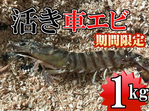 【ふるさと納税】kuru001 新鮮!活き車エビ1kg(20~50尾) 寄付額15,000円