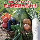 【ふるさと納税】31ve001 新鮮!シャキシャキ!旬の野菜詰め合わせ(7~8種類程度 1回発送)