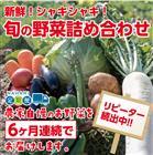 【ふるさと納税】31ve500 新鮮!シャキシャキ!旬の野菜詰め合わせコース(6ヶ月連続発送!!)
