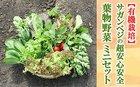9A15-SV ★有機栽培★サガンベジの超安心安全「葉物野菜・ミニセット」【新鮮採れたて】(8A15-SV)