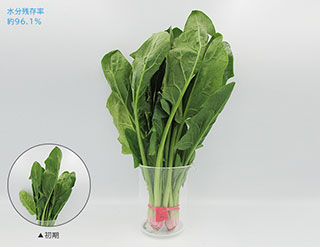 新鮮スリープ野菜室ホウレンソウ
