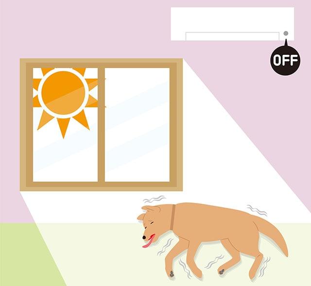 室内犬でも熱中症に注意