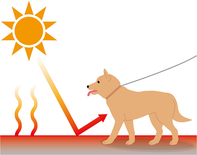 散歩時のアスファルト熱