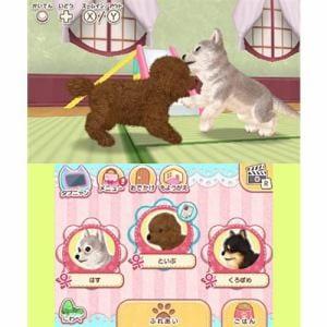 かわいいペットとくらそう! わんニャン&アイドルアニマル 3DS CTR-P-BWAJ