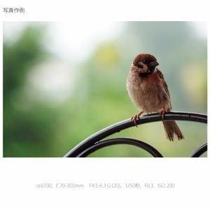 ソニー SEL70350G デジタル一眼カメラα[Eマウント]用レンズ