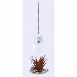 ガラス多肉植物 電球瓶 B 蓋付き グリーン