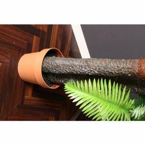 観葉植物 シダ 43 グリーン