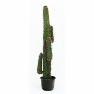 観葉植物 サボテン 4頭 グリーン